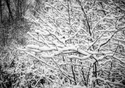 Frozen book images-015