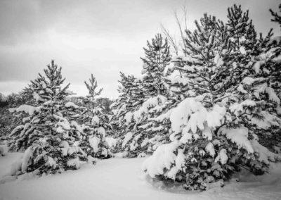 Frozen book images-016